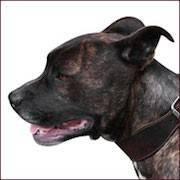 Fort Lauderdale dog bite lawyer
